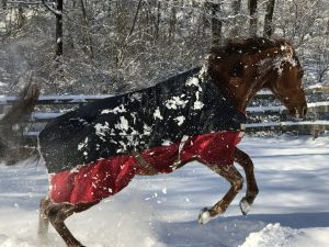 Kali playing in the snow